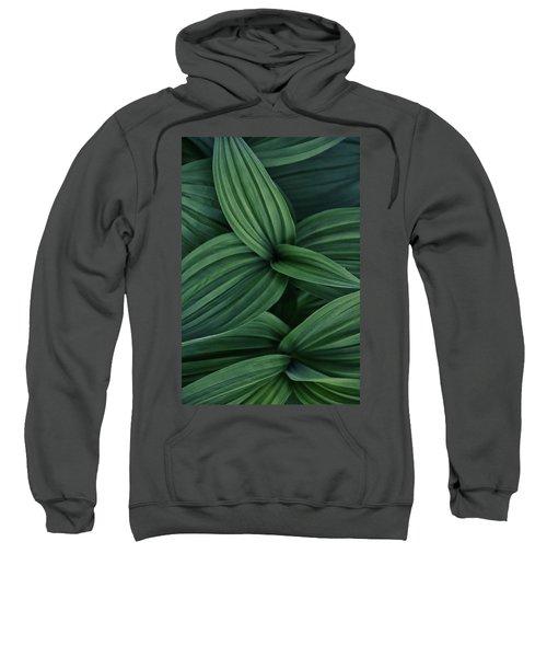False Hellebore Plant Abstract Sweatshirt