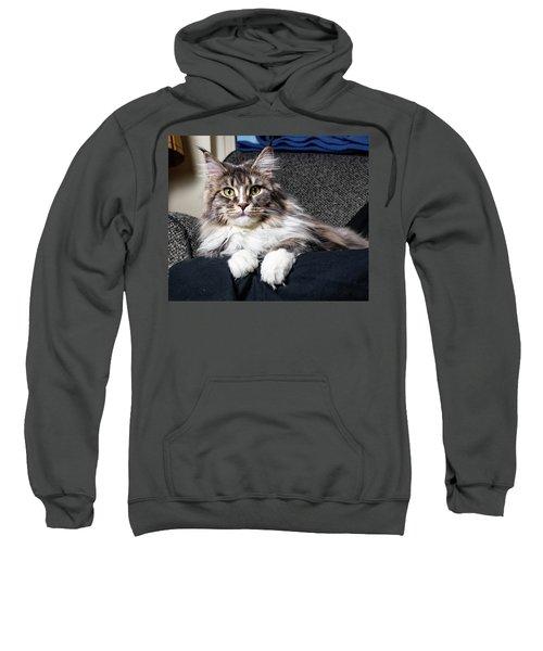 Feline Beauty Sweatshirt