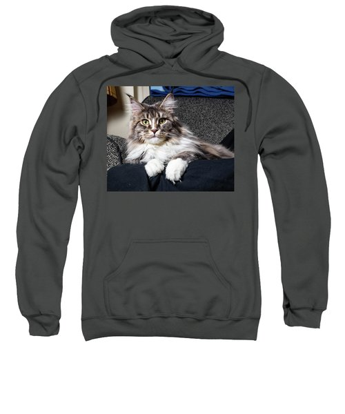 Feline Beauty Sweatshirt