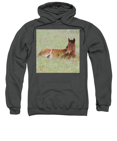 Foal In The Flowers Sweatshirt