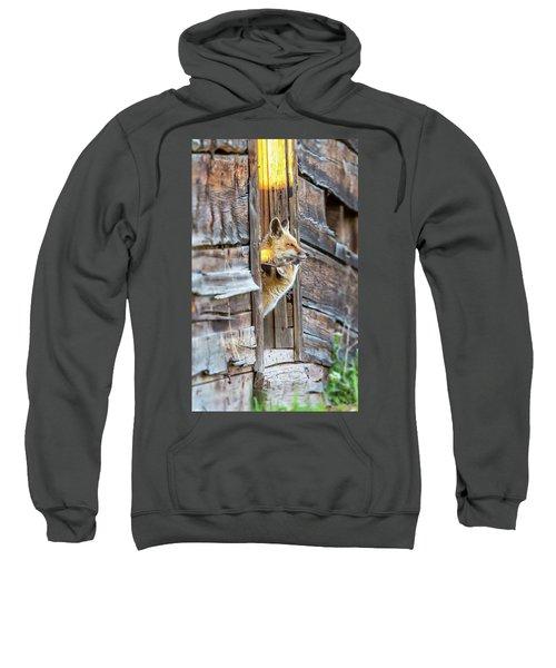 Fox Test  Sweatshirt