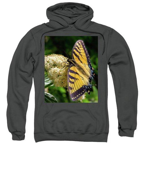 Fuzzy Butterfly Sweatshirt