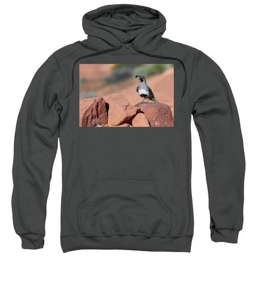 Gambels Quail One Sweatshirt