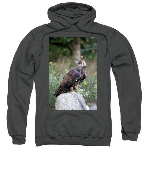 Golden Eagle On Rock 92515 Sweatshirt
