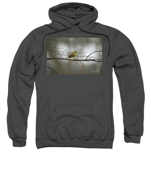 Goldfinch In Winter Looking At You Sweatshirt