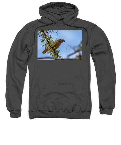 Gray-headed Social Weaver Sweatshirt