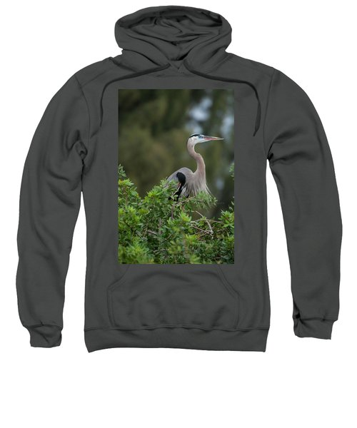 Great Blue Heron Portrait Sweatshirt