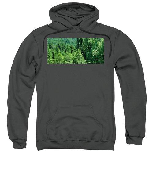 Green Conifer Forest On Steep Hillside  Sweatshirt