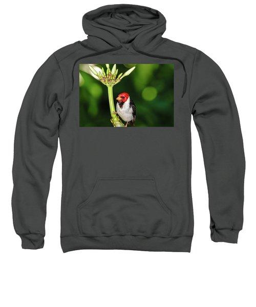 Happy Valentine's Day Bird Sweatshirt
