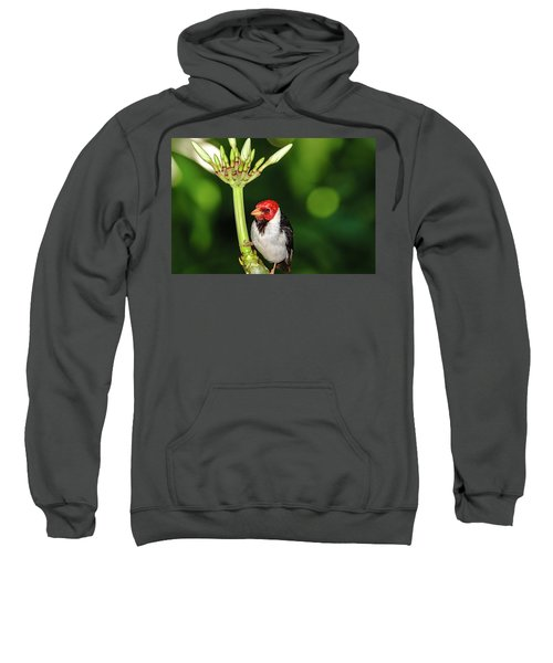 Happy Valentine's Day Bird Sweatshirt