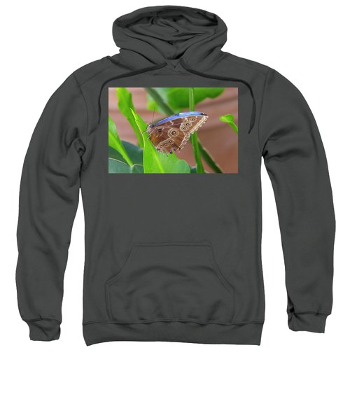 Here's Looking At You Sweatshirt