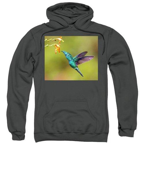 Humhum Bird Sweatshirt
