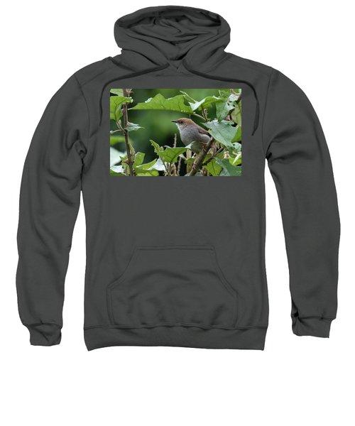 Hunter's Cisticola Sweatshirt