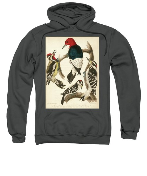 1. Red-headed Woodpecker. 2. Yellow-bellied Woodpecker. 3. Hairy Woodpecker. 4. Downy Woodpecker. Sweatshirt
