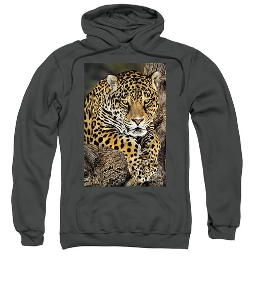 Jaguar Portrait Wildlife Rescue Sweatshirt