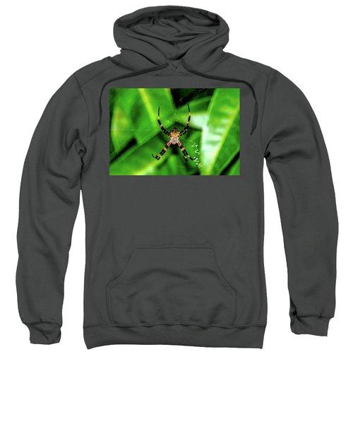 Just Hanging Sweatshirt