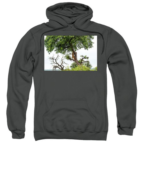 Leopard Descending A Tree Sweatshirt