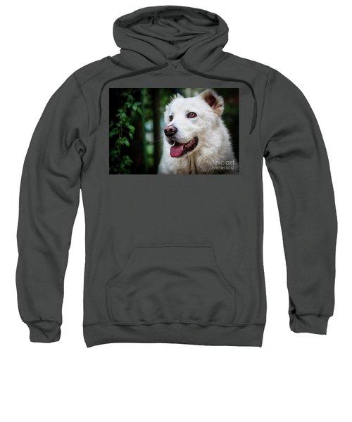Looking Sweatshirt