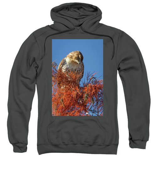Looking Down Sweatshirt