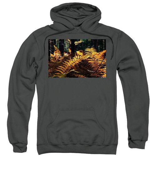 Maine Autumn Ferns Sweatshirt