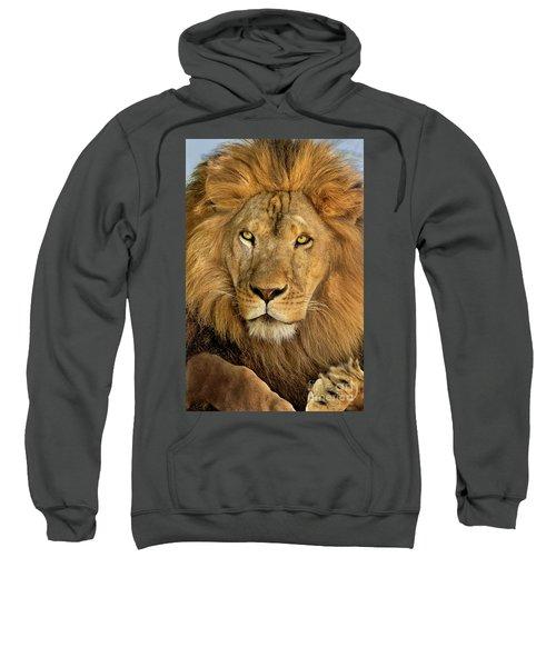 Male African Lion Portrait Wildlife Rescue Sweatshirt
