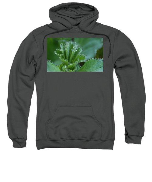 Morning Dew Drops Sweatshirt