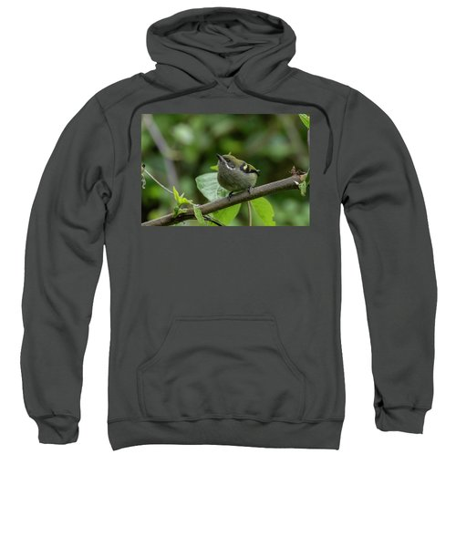 Moustached Tinkerbird Sweatshirt