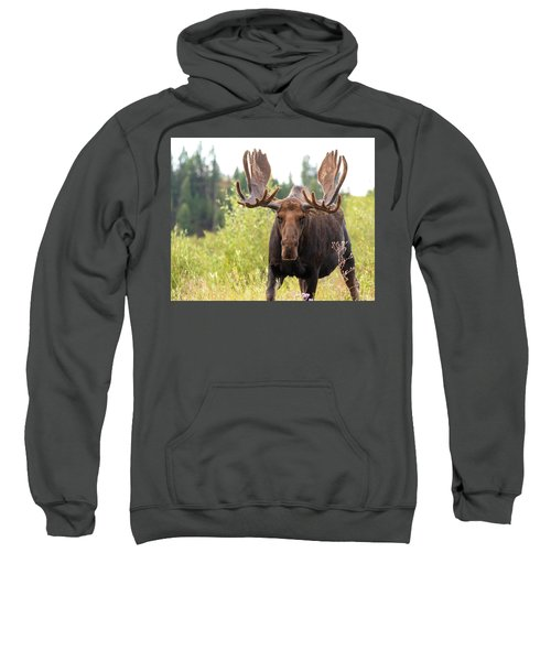 Mr. Moose Sweatshirt