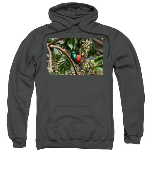 Northern Double-collared Sunbird Sweatshirt