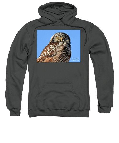 Northern Hawk-owl Sweatshirt