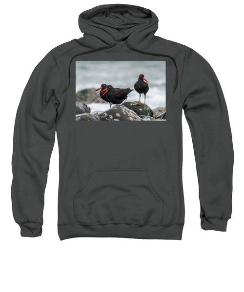 Oystercatchers In The Rain Sweatshirt