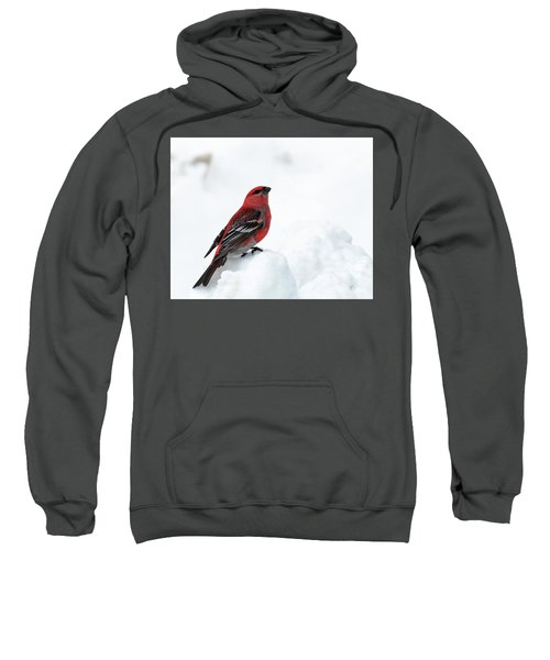 Pine Grosbeak In The Snow Sweatshirt