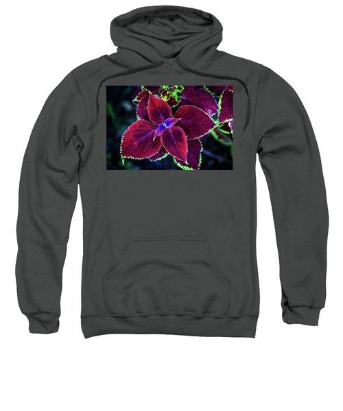 Plum Tones Sweatshirt