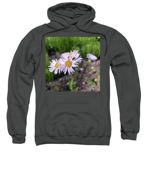 Purple Fleabane 5 Sweatshirt