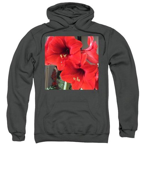 Red Amaryllis Sweatshirt