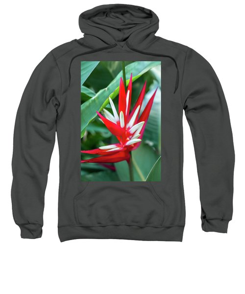 Red And White Birds Of Paradise Sweatshirt