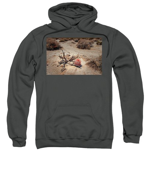 Red Barrel Cactus Sweatshirt