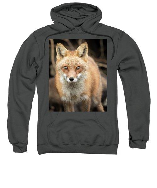 Red Fox Stare Sweatshirt