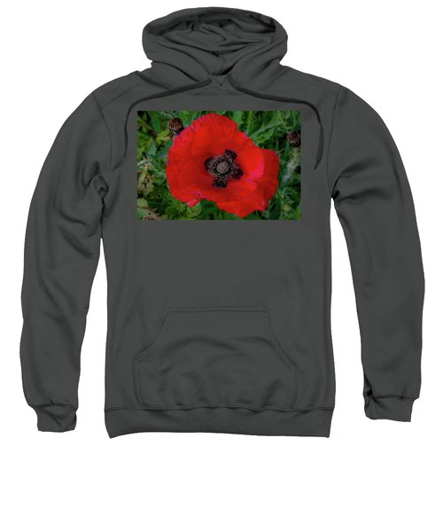 Red Poppy Sweatshirt