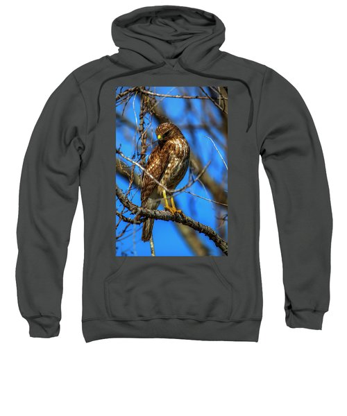 Red Shouldered Hawk Sweatshirt