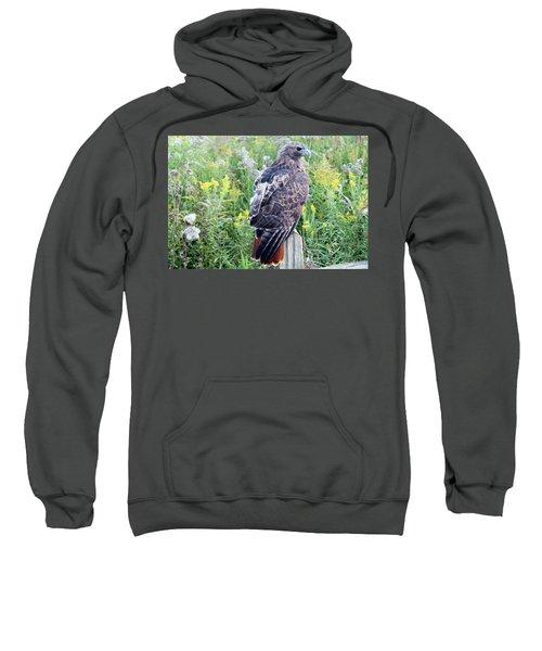 Red-tailed Hawk On Fence Post Sweatshirt