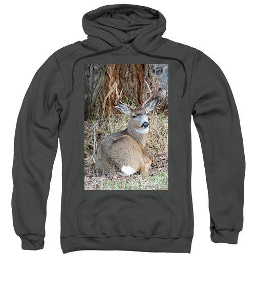 Resting Two-point Sweatshirt