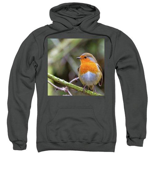 Robin. On Guard Sweatshirt