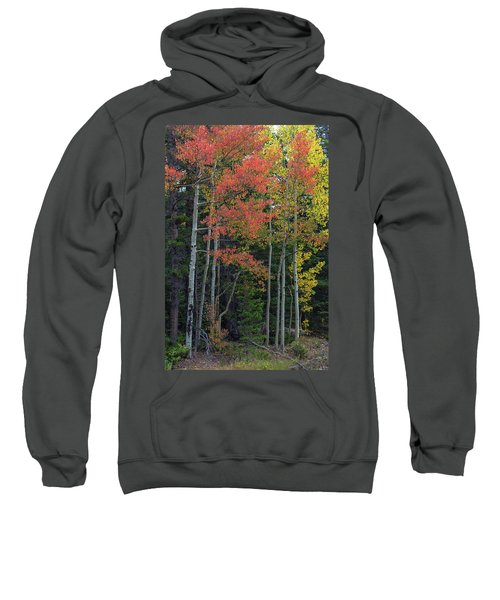 Sweatshirt featuring the photograph Rocky Mountain Forest Reds by James BO Insogna