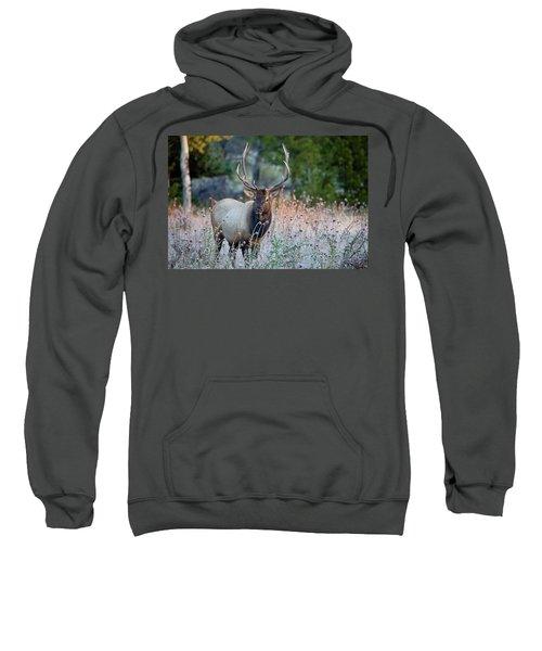 Rocky Mountain Wildlife Bull Elk Sunrise Sweatshirt