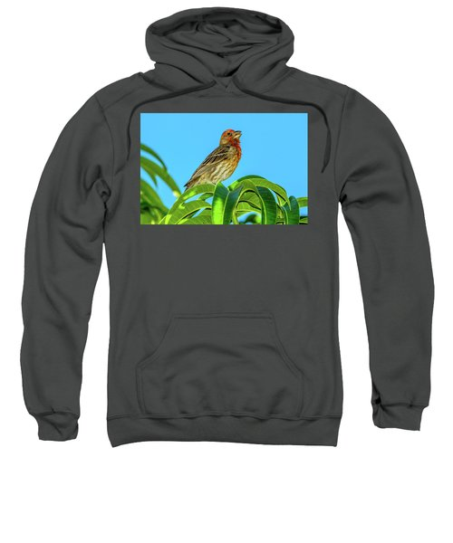Singing House Finch Sweatshirt