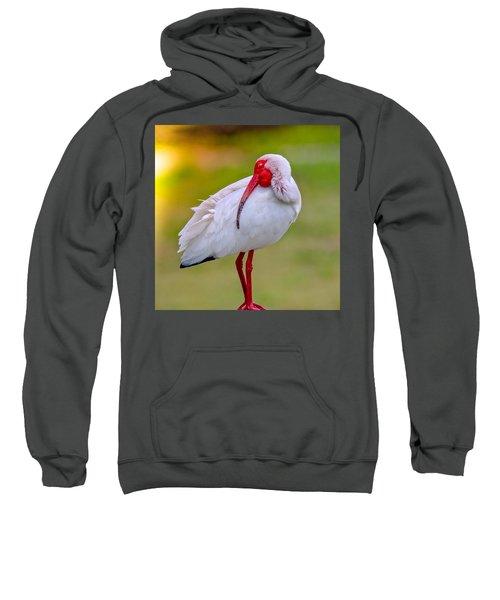 Sleepy Ibis Sweatshirt