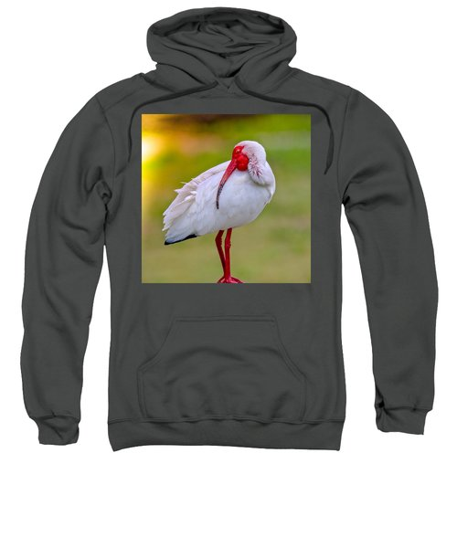 Sleepy Ibis Sweatshirt