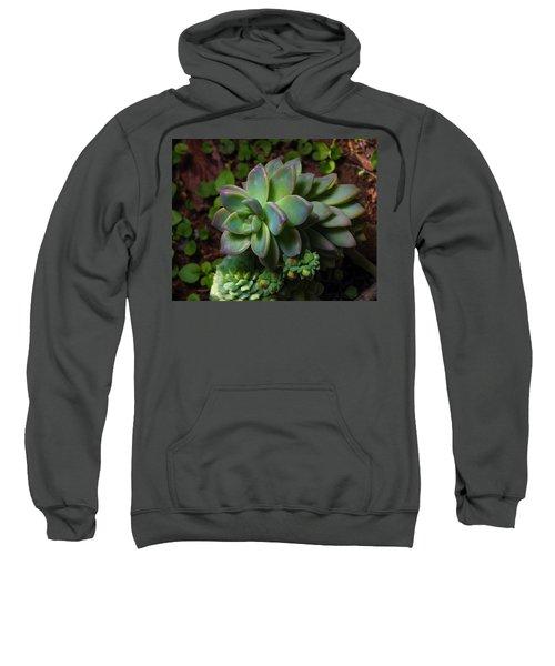 Small Succulents Sweatshirt