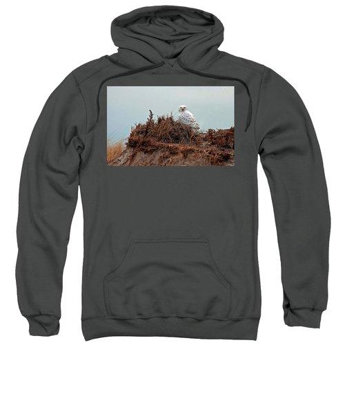 Snowy Owl In The Dunes Sweatshirt